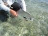 tcl-fish17