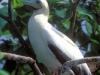 tf-atoll-bird
