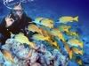 tiamo-diving03