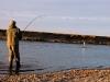 villa-maria-brown-trout55