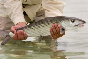 Abaco Lodge bonefish