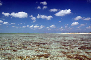 Fly fishing on South Andros Island - The Bahamas