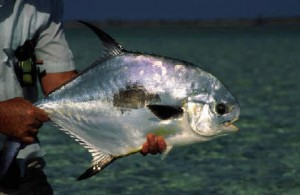 Fly fishing the Bahamas, North Andros, Joulters Cayes