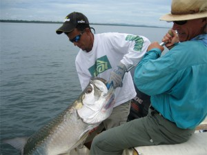 Jungle Tarpon Lodge, Fly fishing costa rica for tarpon