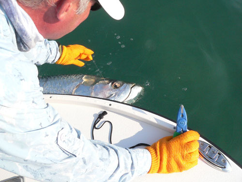 Fly fishing for tarpon in Florida Keys