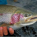 Fly fishing Alaska's Enchanted Lake Lodge for the best rainbow trout fishing in Alaska.