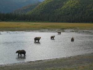 Fly fishing Alaska's Great Alaska Lodge for King Salmon, rainbow trout, bear viewing on the Kenia river and beyond.
