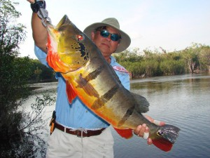Fly Fishing the amazon ith River plate Outfitters for the best peacock bass fishing in the world.