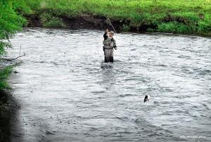 Kamchatka' Sedanka Spring Creek  dry fly fishing for huge rainbows