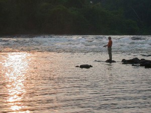 In the Amazon region of Brazil is a lodge called Thamacu dedicated to fly fishing for peacok bass and many otherspecies