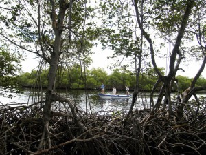 Fly fishing in Mexico for tarpon at Isla del Sabalo - a secret lagoon