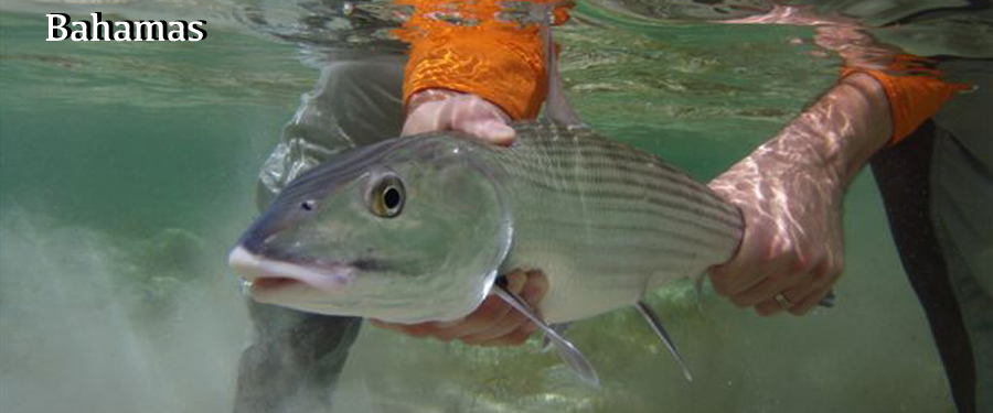 fly fishing bahamas for bonefish