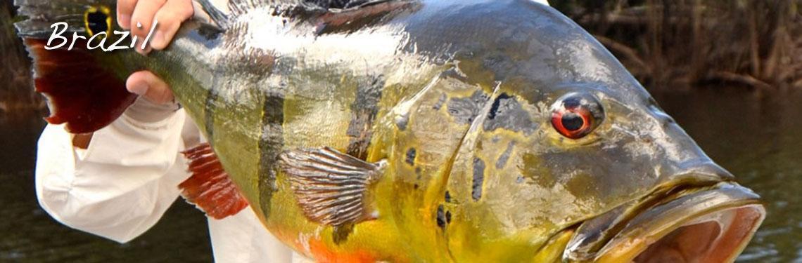 Brazil-Fly-Fishing